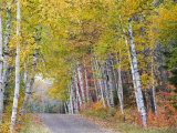 Fall Color Lines Gravel Road  Keweenaw Penninsula  Michigan  USA