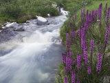Mountain Stream  Ouray  San Juan Mountains  Rocky Mountains  Colorado  USA