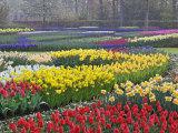 Keukenhof Gardens  Lisse  Netherlands  Holland