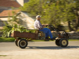 Old man driving cart with vegetables  Stari Grad town  Hvar Island  Dalmatia  Croatia