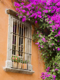 Window and Flower Pots  San Miguel De Allende  Guanajuato State  Mexico