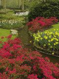 Azalea and daffodil garden  Keukenhof Gardens  Lisse  Netherlands  Holland