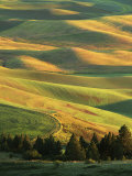 Wheat Fields  Palouse  Steptoe Butte State Park  Whitman County  Washington  USA