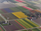 Tulip and hyacinth flower fields  Amsterdam  Netherlands