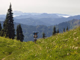 Lone backpacker and wildflowers  Tatoosh Wilderness  Washington Cascades  USA