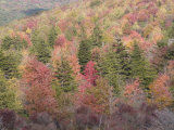 Fall Color in Grayson Highlands State Park  Virginia  USA