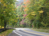 Fall Foliage on Newfound Gap Road  Great Smoky Mountains  Tennessee  USA