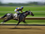 Spring Thoroughbred Horse Racing at Keeneland  Kentucky  USA
