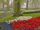 Tulips and Daffodils  Keukenhof Gardens  Lisse  Netherlands