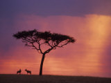 Sunset  Masai Mara National Park  Kenya