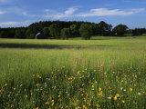 Wildflower meadow  Montgomery County  Missouri  USA