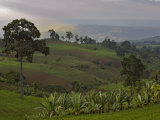Lush Green Landscape between Bonga and Mizan Teferi  Ethiopia