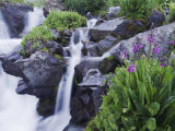 Mountain Stream and Wildflowers  Ouray  San Juan Mountains  Rocky Mountains  Colorado  USA