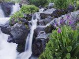 Mountain Stream and Wildflowers  Ouray  San Juan Mountains  Rocky Mountains  Colorado  USA