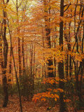 Autumn forest  Blue Ridge Parkway  Virginia  USA