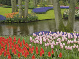 Pattern of tulips and grape hyacinth flowers  Keukenhof Gardens  Lisse  Netherlands  Holland