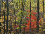 Autumn forest near Peaks of Otter  Blue Ridge Parkway  Appalachian Mountains  Virginia  USA