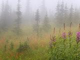 Misty Meadow Scenic  Revelstoke National Park  British Columbia  Canada