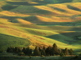 Wheat Fields  Palouse  Steptoe Butte State Park  Whitman County  Washington  USA
