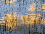 Reeds Silhouetted  Spencer Lake  Whitefish  Montana  USA