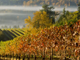 Fog Pools in a Finger of the Willamette Valley  Oregon  USA