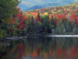 Shoreline of Heart Lake  Adirondack Park and Preserve  New York  USA