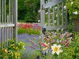 Garden Gate  Bainbridge Island  Washington  USA