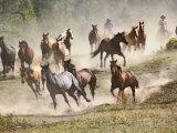Horses Running During Roundup  Montana  USA