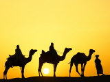 Camels and camel driver silhouetted at sunset  Thar Desert  Jodhpur  India