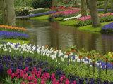 Tulip and Hyacinth Garden  Keukenhof Gardens  Lisse  Netherlands  Holland