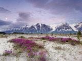 Wildflowers and Fairweather Range  Alsek River Valley  Alaska  USA