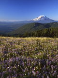 Mt Adams in distance  Meadow  Goat Rocks Wilderness  Washington  USA