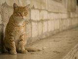 Cat and stone wall outside of Rector's Palace  Dubrovnik  Dalmatia  Croatia