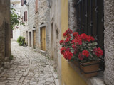Cobblestone Street and Geraniums  Bale  Croatia