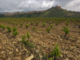 Vineyard in stony soil with San Vicente de la Sonsierra Village  La Rioja  Spain