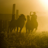 Silhouette of a Wrangler Roping Horses  Ponderosa Ranch  Seneca  Oregon  USA