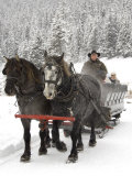Winter Sleigh Ride  Lake Louise  Alberta  Canada