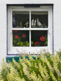 Window with heather  Port Stanley  Falkland Islands