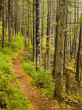 A trail around Ammonoosuc Lake  White Mountain National Forest  New Hampshire  USA