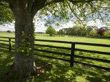 Thoroughbred Horse Raising  County Kildare  Ireland