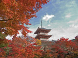 Pagoda in Autumn Color  Kyoto  Japan