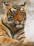 Royal Bengal Tiger Watching  Ranthambhor National Park  India