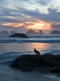 Seagull Silhouette on Coastline  Bandon Beach  Oregon  USA