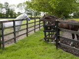 Breeding Thoroughbreds  County Kildare  Ireland