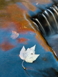 Leaf Floating in Fall Reflections  Bond Falls  Upper Peninsula  Michigan  USA