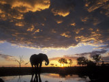 Elephant Silhouetted at Marabou Pan  Savuti Marsh  Chobe National Park  Botswana
