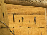 Old Fence in Prairie  Montana  USA