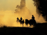 Cowboys Driving Wild Horses  Burns  Oregon  USA