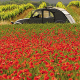 La 2 CV aux Coquelicots