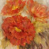 Calypso Reds II
